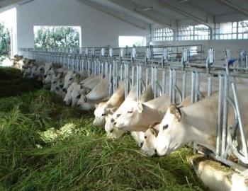 Autocatture per bovini